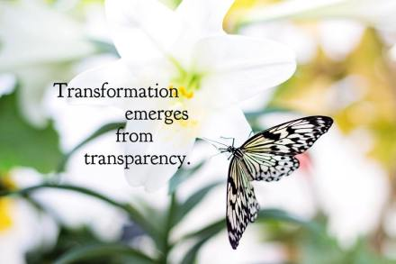 transform transparent